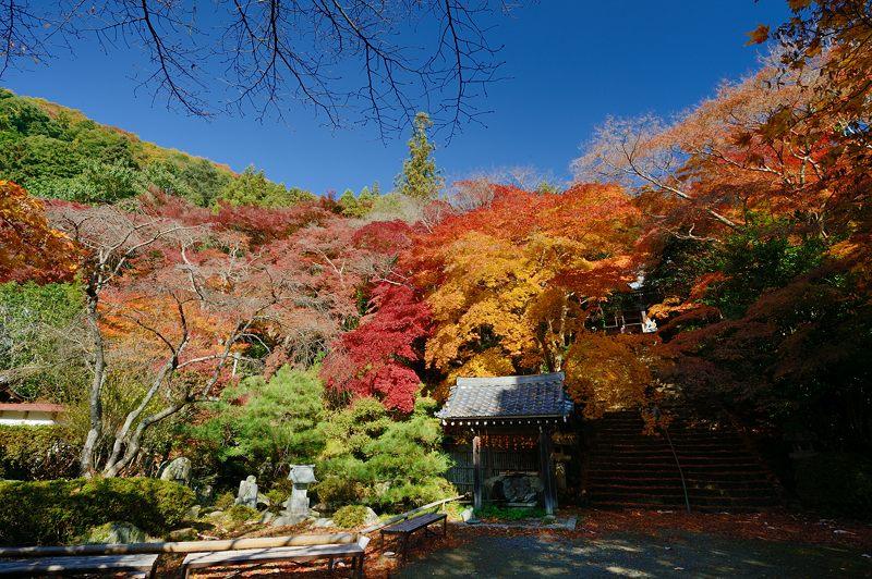 2013京都の紅葉!・金蔵寺 其の一_f0032011_2062167.jpg