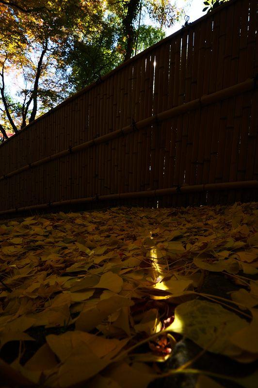 2013京都の紅葉!・金蔵寺 其の一_f0032011_206278.jpg