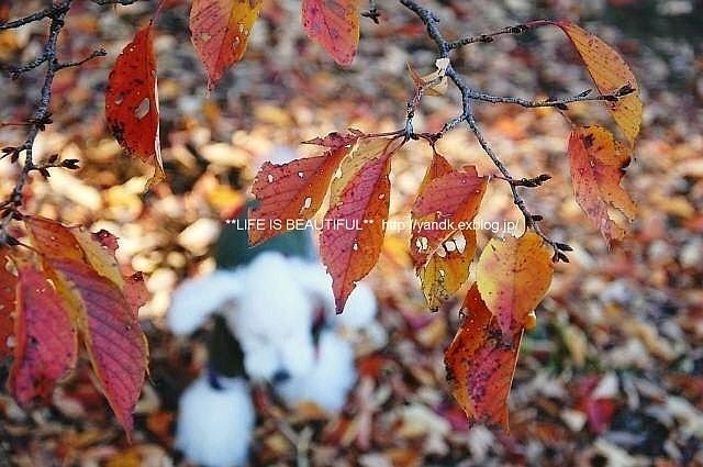 落ち葉のいたずら_d0083623_23353599.jpg