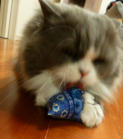 猫のためのマッサージセミナーに参加_e0237625_1635429.jpg