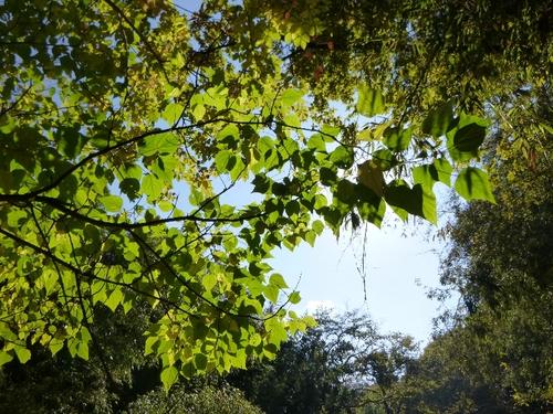 秋のブランコ_c0113733_1354018.jpg