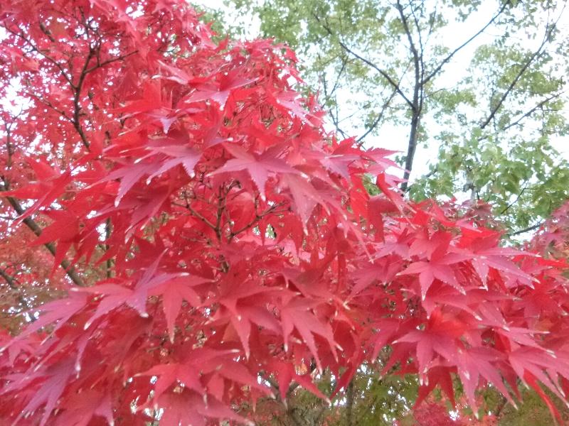 秋のブランコ_c0113733_143222.jpg