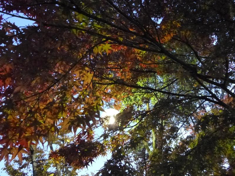 秋のブランコ_c0113733_1433932.jpg