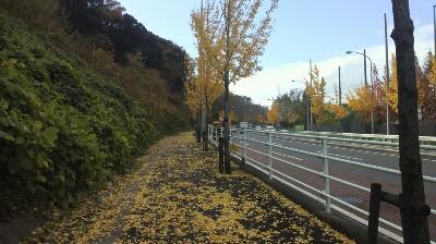 ハムヲさんの朝ラン日記  (2013/11/26)_a0260034_1261368.jpg