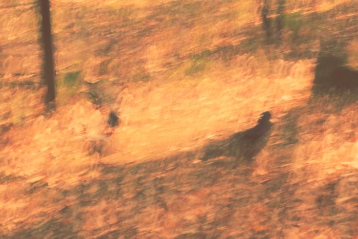 ■■ Sea of Leaves ■■_c0195662_22212274.jpg