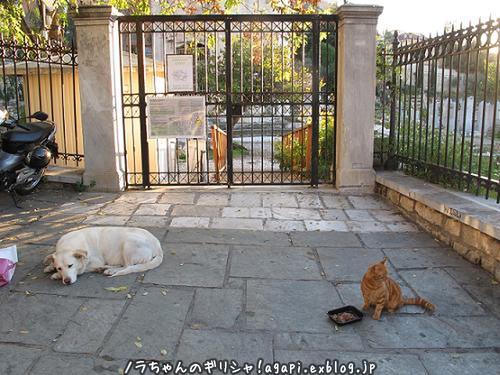 アルゴは賢い白い犬、ノラ犬だけどね、、。_f0037264_20003759.jpg