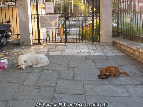 アルゴは賢い白い犬、ノラ犬だけどね、、。_f0037264_20010272.jpg