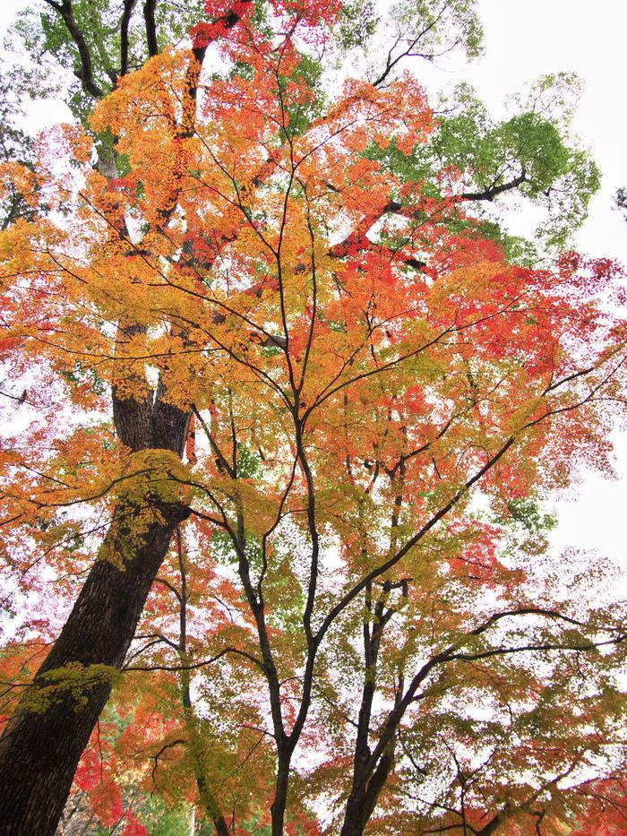 紅葉 2013 <長岡天満宮>        _f0021869_001234.jpg