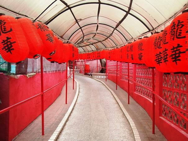 香港のハト料理_e0148373_19175157.jpg