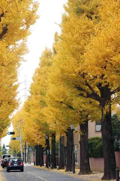 秋深まりて・・・_f0234596_15193994.jpg