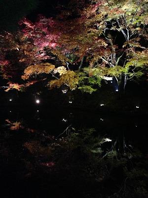 京都紅葉ツアー_a0273699_19122127.jpg