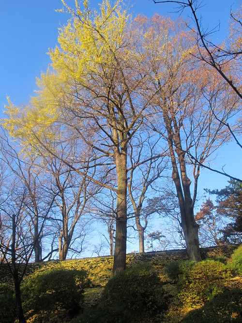 晩秋、千秋公園の紅葉・黄葉・落葉のルクス(lux)・・・その11_c0075701_6444115.jpg