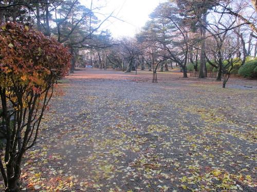 晩秋、千秋公園の紅葉・黄葉・落葉のルクス(lux)・・・その11_c0075701_6444776.jpg