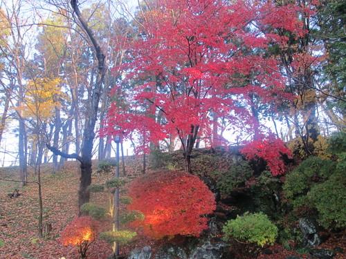 晩秋、千秋公園の紅葉・黄葉・落葉のルクス(lux)・・・その11_c0075701_6445811.jpg
