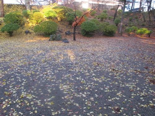 晩秋、千秋公園の紅葉・黄葉・落葉のルクス(lux)・・・その11_c0075701_645535.jpg