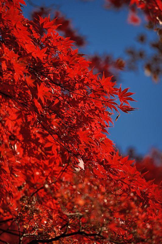2013京都の紅葉!・金蔵寺 其の二_f0032011_19473060.jpg