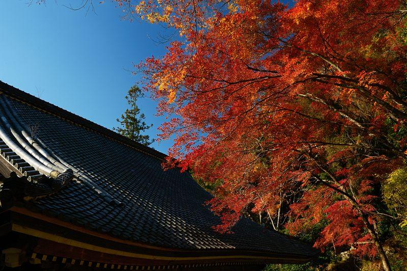 2013京都の紅葉!・金蔵寺 其の二_f0032011_19481222.jpg