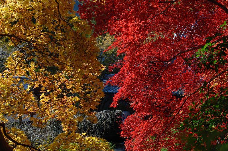2013京都の紅葉!・金蔵寺 其の二_f0032011_19494580.jpg