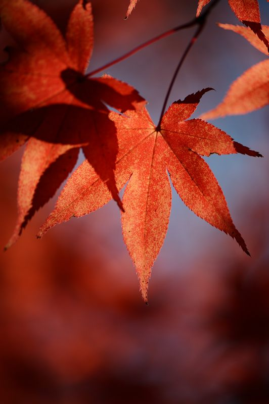 2013京都の紅葉!・金蔵寺 其の二_f0032011_1952322.jpg