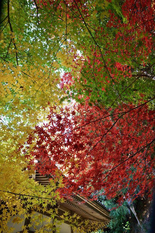 2013京都の紅葉!・金蔵寺 其の二_f0032011_19542782.jpg