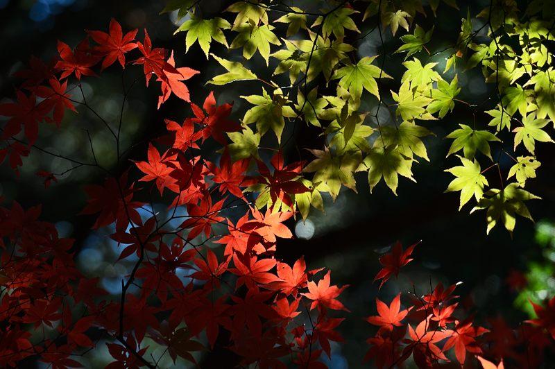 2013京都の紅葉!・金蔵寺 其の二_f0032011_19543725.jpg