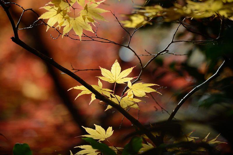 2013京都の紅葉!・金蔵寺 其の二_f0032011_19544530.jpg