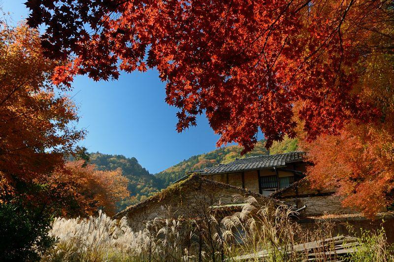 2013京都の紅葉!・金蔵寺 其の二_f0032011_1955636.jpg
