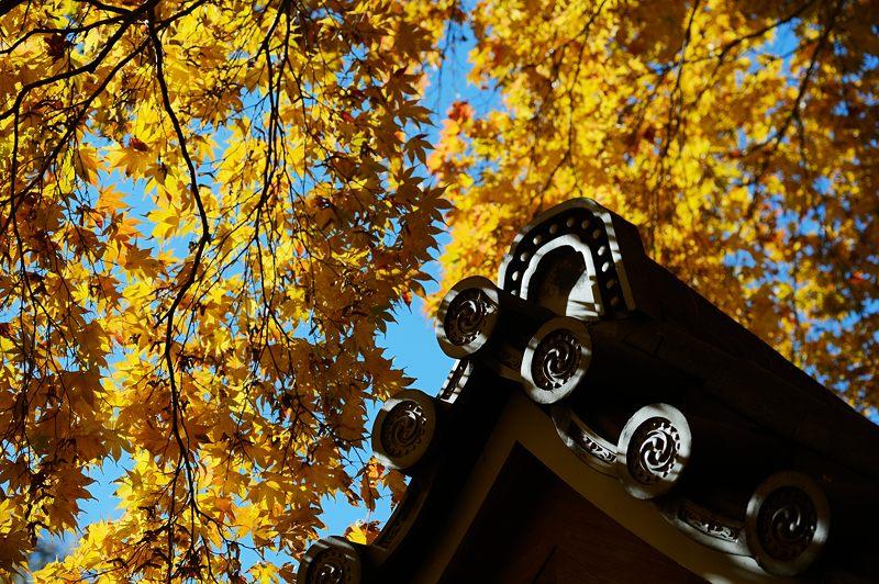 2013京都の紅葉!・金蔵寺 其の二_f0032011_20184443.jpg