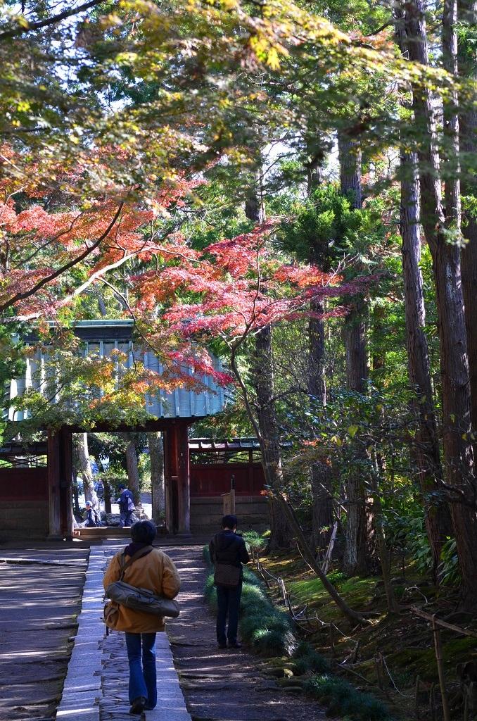 鎌倉の紅葉 寿福寺_d0065116_20104148.jpg