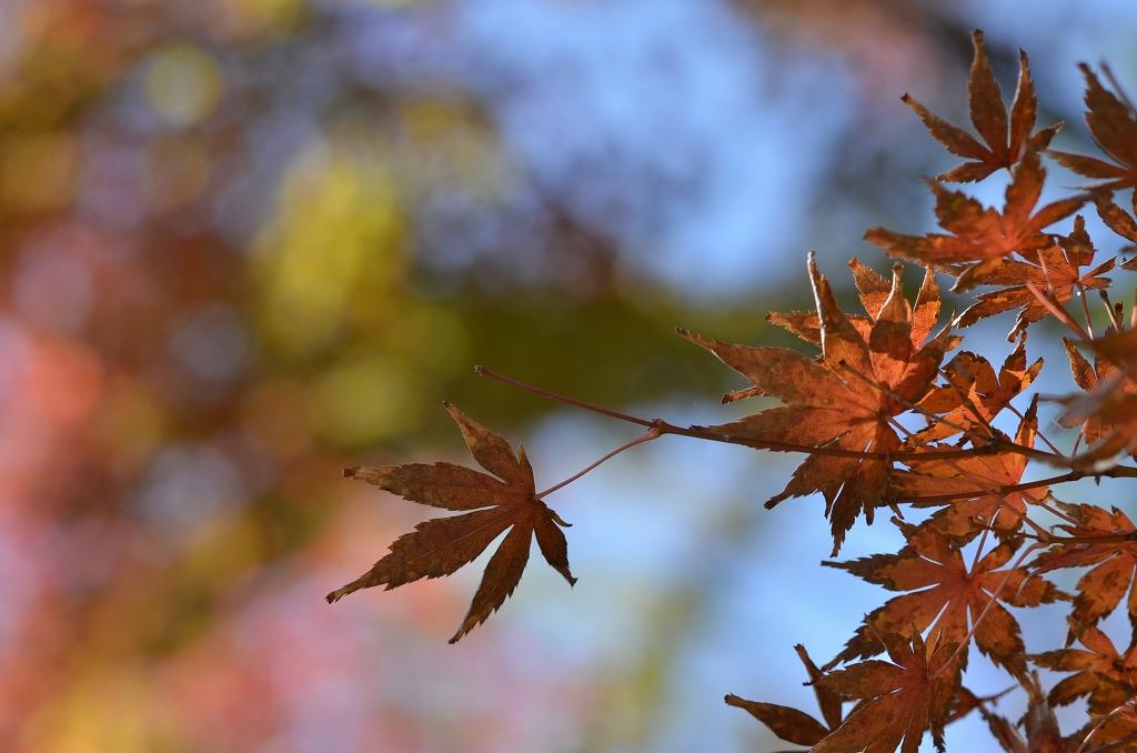 鎌倉の紅葉 寿福寺_d0065116_2064832.jpg