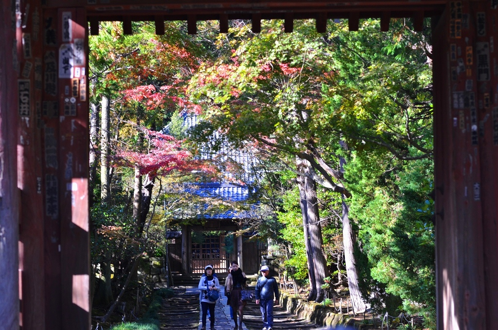 鎌倉の紅葉 寿福寺_d0065116_2075213.jpg