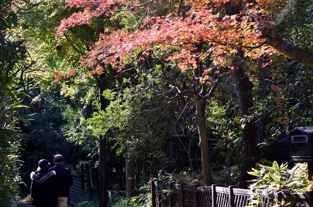 鎌倉の紅葉 寿福寺_d0065116_2083675.jpg