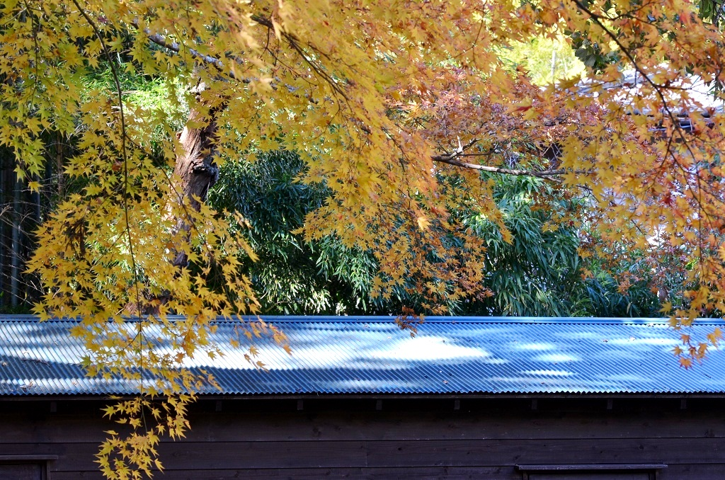 鎌倉の紅葉 寿福寺_d0065116_208491.jpg