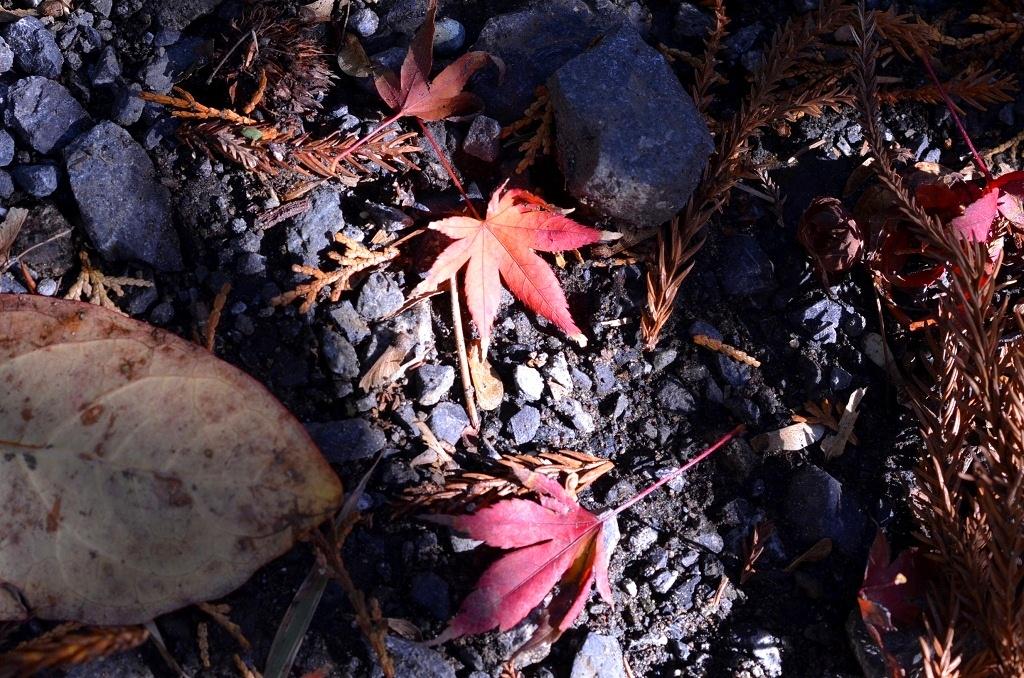 鎌倉の紅葉 寿福寺_d0065116_2085856.jpg