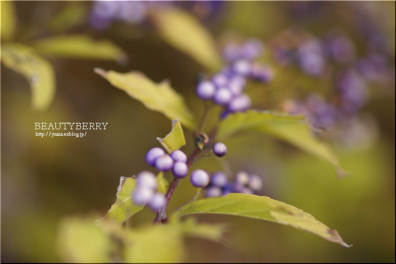 小紫_f0156117_07154054.jpg