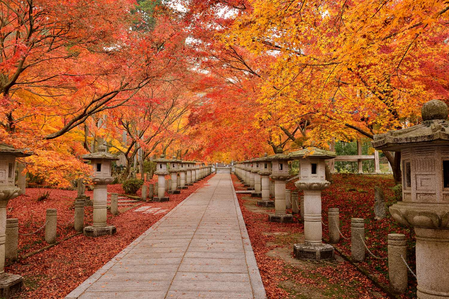 Beautiful Wallpaper The Best Autumn Leaf Viewing Spots In Kansai Area That You