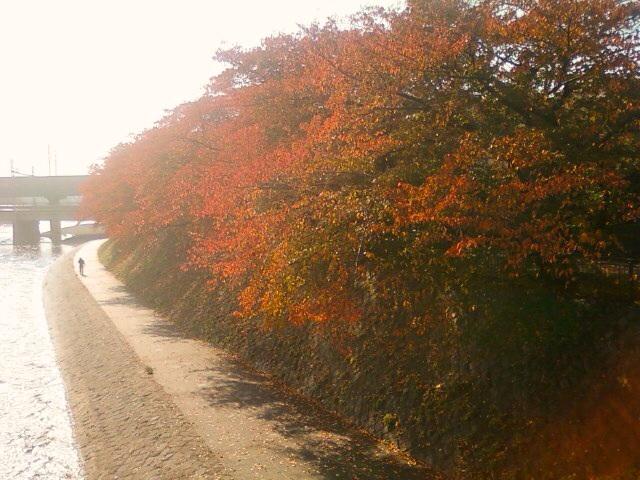 京都紅葉たより 2013_b0153663_17393181.jpg