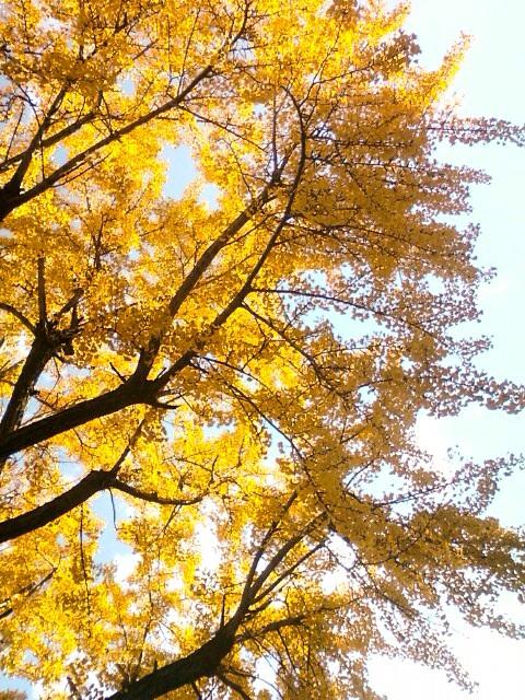 京都紅葉たより 2013_b0153663_1740411.jpg