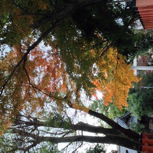 京都紅葉たより 2013_b0153663_17412983.jpg