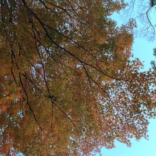 京都紅葉たより 2013_b0153663_1742448.jpg
