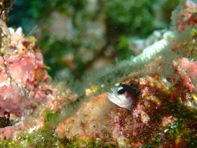 ガラパゴスの魚2 小物編♪            GALAPAGOS_e0184067_13385582.jpg