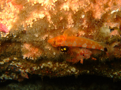 ガラパゴスの魚2 小物編♪            GALAPAGOS_e0184067_13391579.jpg