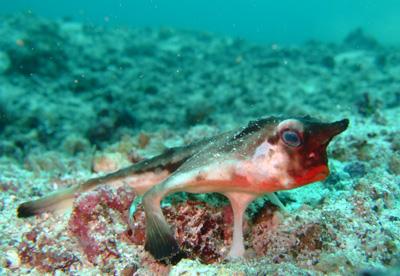 ガラパゴスの魚2 小物編♪            GALAPAGOS_e0184067_13411034.jpg