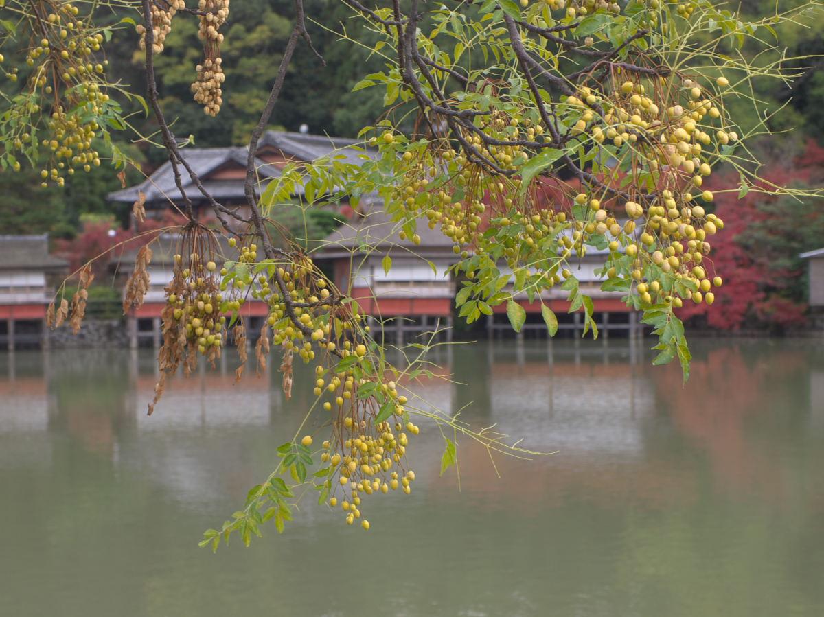 紅葉 2013 <長岡天満宮>        _f0021869_23235017.jpg
