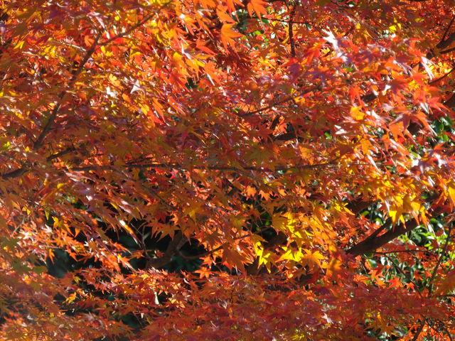 京都市動物園_c0001670_20371372.jpg
