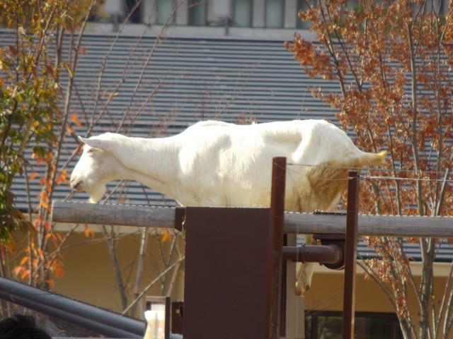 京都市動物園_c0001670_20465931.jpg