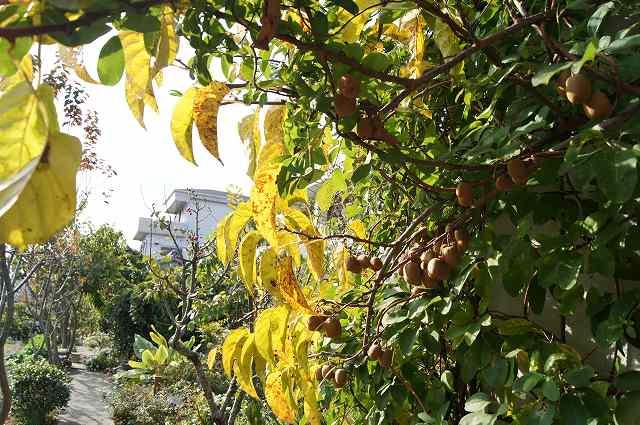 晩秋の風の通る庭_e0181373_2218253.jpg