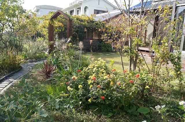 晩秋の風の通る庭_e0181373_22191692.jpg