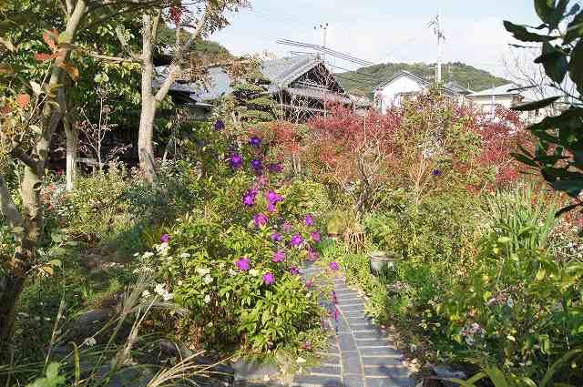晩秋の風の通る庭_e0181373_22192769.jpg