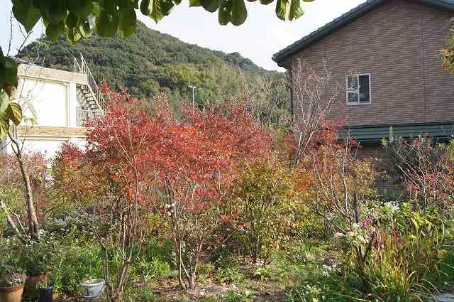 晩秋の風の通る庭_e0181373_22193228.jpg